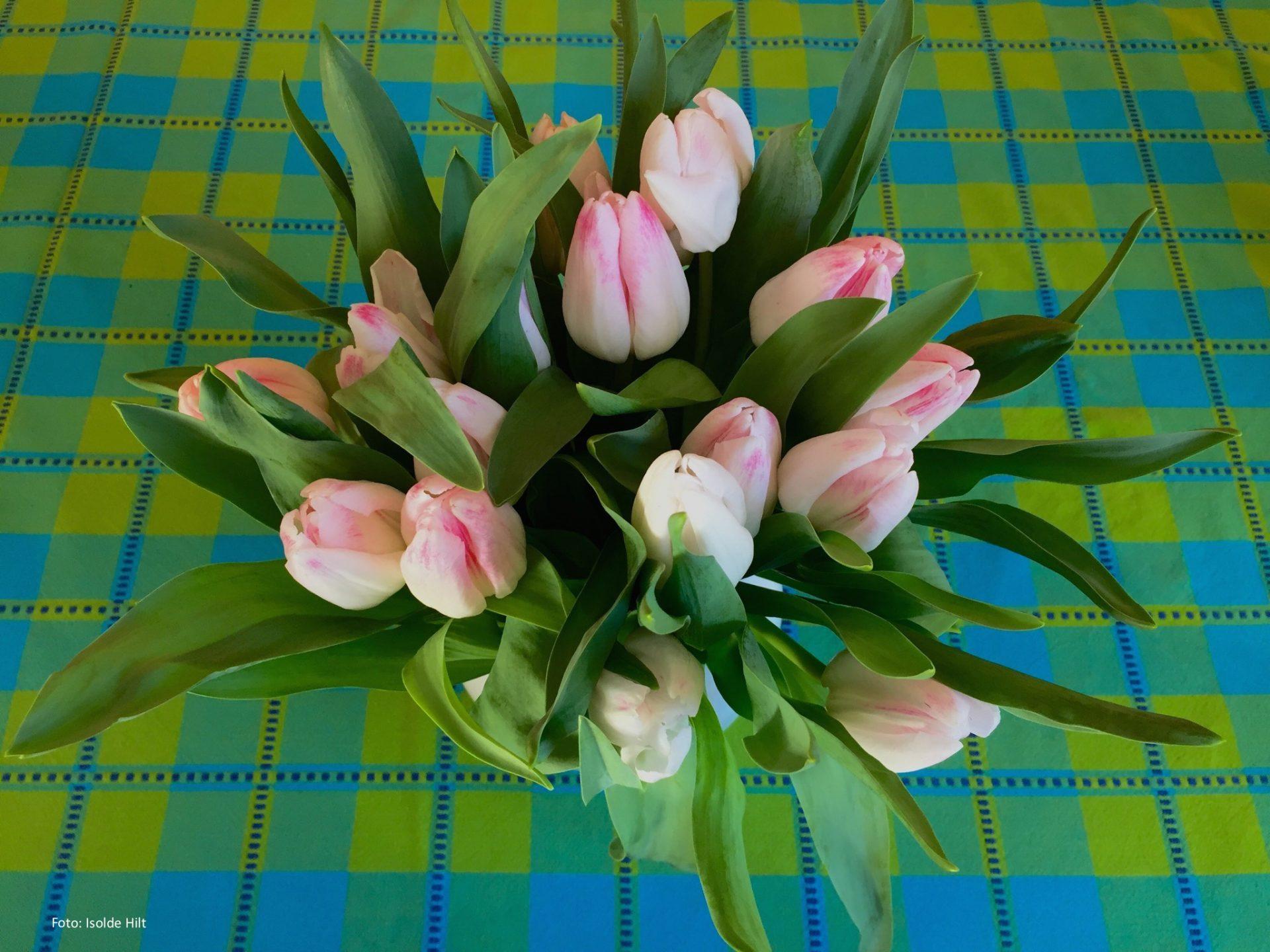 So Halten Blumen Länger Frisch